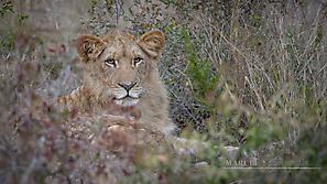 Bilder Fotoreise Südafrika 2018