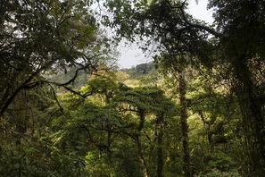 Poas Nebelwald - Poas Cloudforest